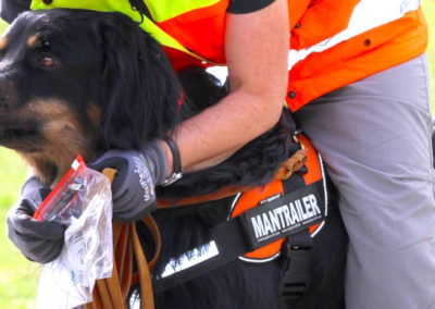Ausbildung für Personensuchhunde