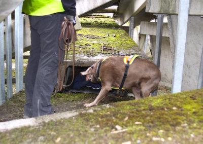 Ausbildung Personenspürhunde
