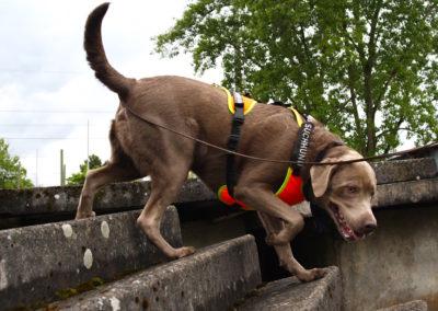 Workshop für Personenspürhunde
