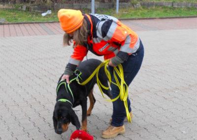 Mantrailing Intensivtraining mit Bloodhound
