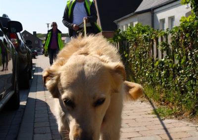 Ausbildung Personenspürhunde auf Sylt