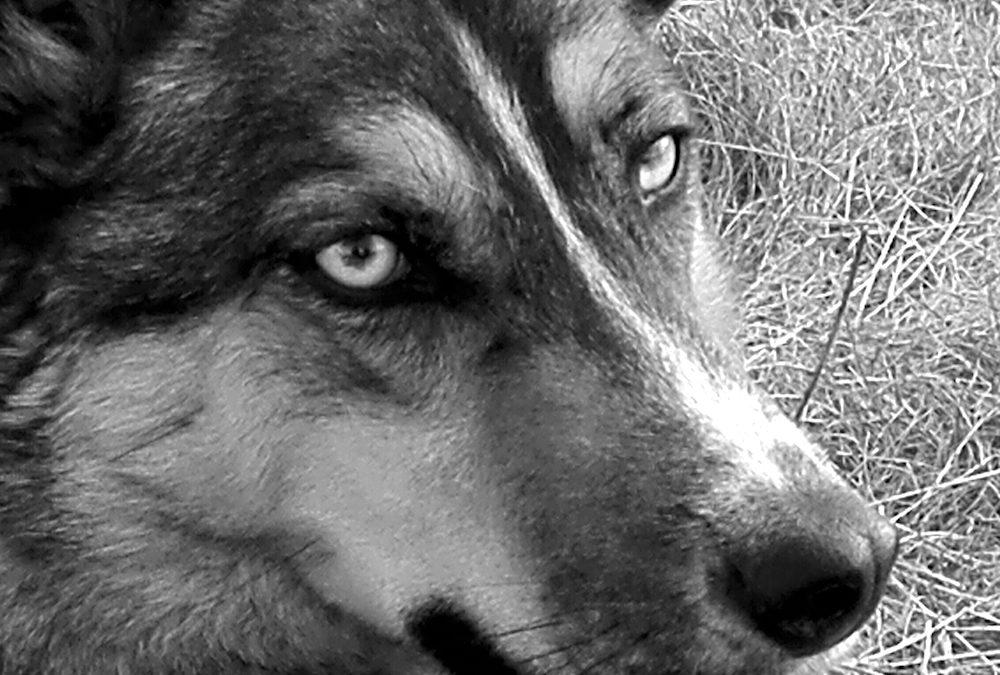 """Strassenhunde — die """"outlaws""""*"""