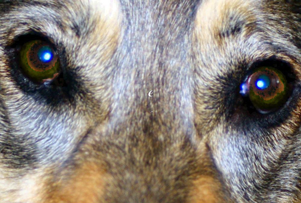 Stimmungsübertragung vom Menschen auf den Hund*